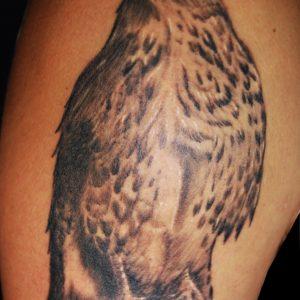 Ritratto realistico di un falco in bianco e nero