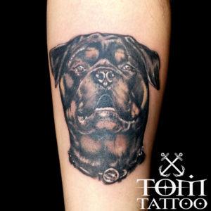 Ritratto di un Rottweiler fotografato frontalmente