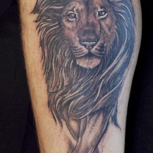 Ritratto di un leone in avanzamento
