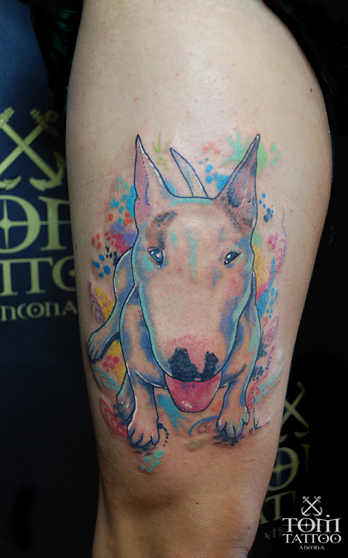 Ritratto frontale a colori di un Bull Terrier