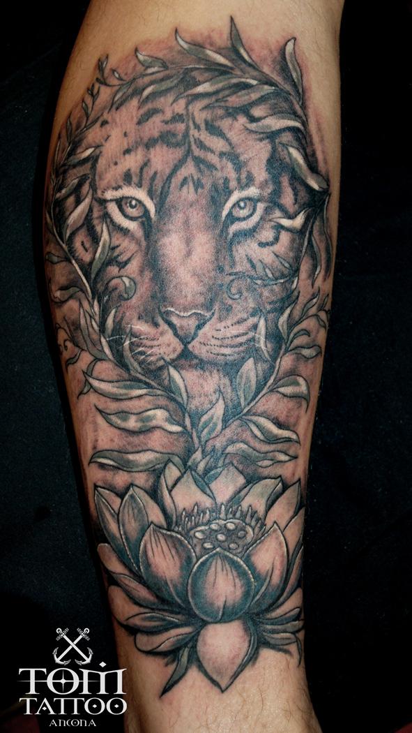 Muso di una tigre sopra un fiore di loto