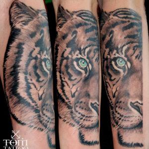 Tigre con occhio azzurro